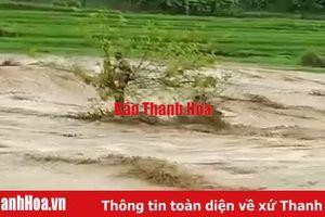 Huyện Quan Sơn: BĐBP giải cứu 1 người dân bị lũ cuốn, mắc kẹt trên ngọn cây