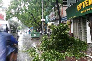 Hà Nội: Mưa bão chưa gây ngập nặng, nhưng nhiều cây xanh gãy cành, bật gốc