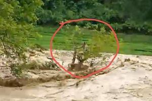 Đang nỗ lực giải cứu người đàn ông bị lũ cuốn mắc kẹt trên cây