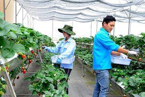 Lâm Ðồng có 77,6% số xã đạt chuẩn nông thôn mới