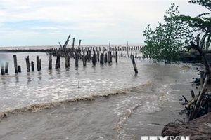 Cà Mau: Mực nước biển Tây dâng cao kỷ lục, nguy cơ vỡ đê