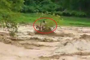 Clip: Người đàn ông bị mắc kẹt trên cây dưới dòng nước lũ đang cuồn cuộn chảy siết