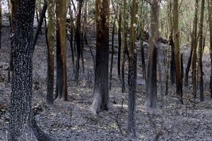 Nguyên do bất ngờ khiến nam thanh niên nhiều lần châm lửa đốt rừng