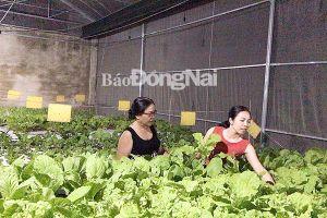 Khởi nghiệp bằng nghề trồng rau thủy canh