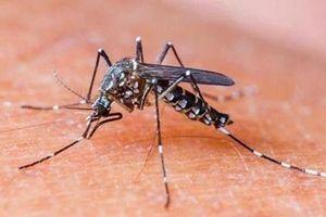 15 người tử vong, gần 125.000 ca mắc sốt xuất huyết