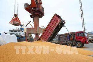 Trung Quốc tạm dừng mua nông sản Mỹ