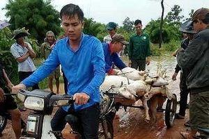 Đắk Lắk: Những hình ảnh xót xa từ vùng rốn lũ Ea Súp