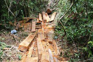 Phá rừng Trà Kót ở Quảng Nam: Làm rõ trách nhiệm, báo cáo trước 15.8