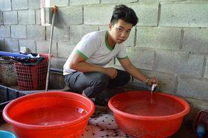 Hội An: Có hệ thống cấp nước sạch, dân vẫn 'khát'