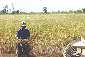 Thời điểm phá hủy hệ sinh thái sông Mekong sẽ tới nhanh hơn