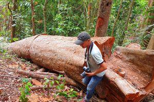 Vụ 'Rừng tự nhiên lại bị xẻ thịt': Nhanh chóng khởi tố vụ án