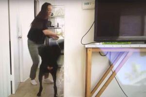 YouTuber bị dân mạng tẩy chay vì ngược đãi thú cưng