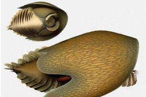 Phát hiện sinh vật tiền sử hình dạng giống phi thuyền 'Star Wars'