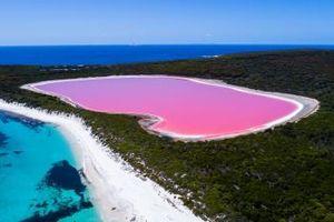 Dự án khôi phục màu hồng của Hồ Pink Lake ở Australia