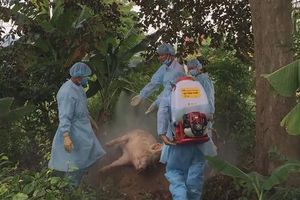 Quảng Ngãi: Đề nghị hỗ trợ vắc xin, hóa chất phòng chống dịch bệnh ở gia súc, gia cầm