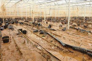 Vùng lúa Cát Tiên, Lâm Đồng khắc phục hậu quả lũ lịch sử