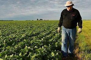 Mất thị trường nông sản, nông dân Mỹ lên án Tổng thống Trump
