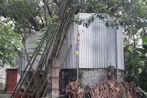 Cả làng quây tôn, dựng chốt bảo vệ cây sưa 22 tỷ ở Vĩnh Phúc