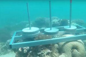 Hết bị tố ngược đãi lợn, 'Cuộc đua kỳ thú' lại bị tố làm tổn hại san hô