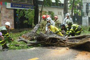 Nơm nớp nỗi lo cây xanh gãy cành, bật gốc ở Hà Nội mùa mưa bão