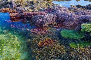 San hô Phú Yên đang bị hủy hoại, cần bảo vệ khẩn cấp