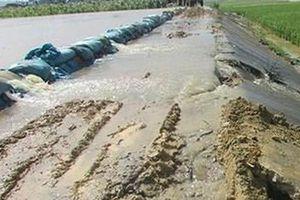 Đắk Lắk: Nước tràn đê bao, người dân gặt lúa chạy lũ