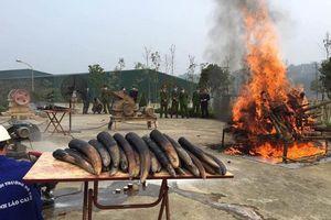 Việt Nam tích cực thực hiện cam kết về tiêu hủy ngà voi, sừng tê giác