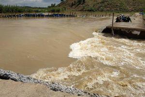 Vỡ đê khiến hơn 1.000 ha lúa bị ngập ở Đắk Lắk