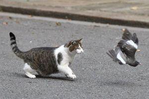 Ảnh động vật: Mèo đuổi bắt chim, sư tử ngáp...