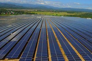 Doanh thu hàng tỉ đồng mỗi ngày nhờ điện mặt trời