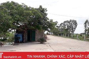 Vi phạm hành lang đê điều ở Can Lộc kéo dài, khó xử lý!