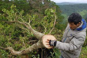 Triệu tập đối tượng chỉ đạo 11 người chặt phá rừng phòng hộ Đà Lạt