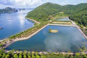 Đảo Thẻ Vàng-nơi có đại công trường trái phép giữa vịnh Bái Tử Long