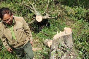 Triệu tập kẻ chủ mưu thuê 11 người phá rừng phòng hộ Đà Lạt