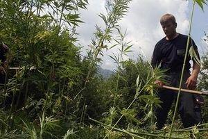 Albania với nỗ lực đẩy lùi tội phạm ma túy