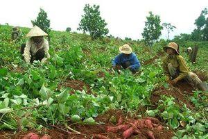 Dán tem truy xuất nguồn gốc nông sản: Nông dân chưa mặn mà