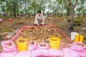 Hơn 1400 vật liệu chưa nổ tại Triệu Phong (Quảng Trị) được MAG xử lý an toàn