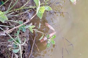 Tôm chết hàng loạt, người nuôi ở Quảng Bình thua lỗ nặng