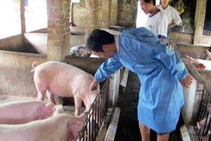 Hà Nội: Tăng cường rà soát kỹ thuật phòng, chống ngăn chặn triệt để dịch tả lợn Châu Phi