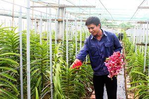 Trung tâm Nông nghiệp công nghệ cao: Sẽ thực hiện cổ phần hóa