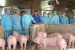 Hà Nội: 50% số xã, phường, thị trấn đã qua 30 ngày không phát sinh bệnh dịch tả lợn châu Phi