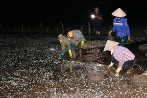 Lộ nguyên nhân khiến gần 600 ha ngao chết trắng ở biển Tiền Hải
