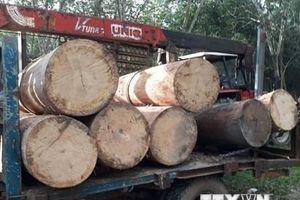 Tây Ninh: Củng cố hồ sơ khởi tố nhóm chở trộm gỗ tại rừng Dầu Tiếng
