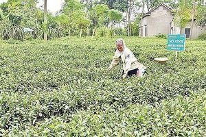 Cần thêm sự hỗ trợ để giảm nghèo bền vững ở vùng DTTS của Ba Vì