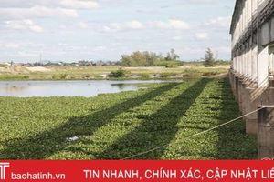 'Đau đầu' xử lý bèo tây phủ kín sông ngòi, kênh rạch ở Hà Tĩnh