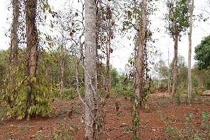 Sự kiện 24/7: Hơn 1.000 ha tiêu chết khô do hạn hán ở Quảng Trị