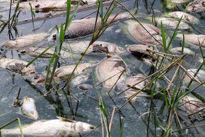 Cá chết nổi trắng mặt hồ Công viên Yên Sở
