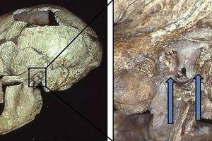Hài cốt cổ đại tiết lộ vị tổ tiên 'người cá' của chúng ta