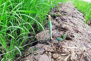 Thái Bình: Ra đồng bón lúa, một người bị điện giật tử vong