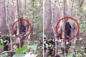 Xuất hiện video 'rõ nét nhất' về sinh vật nghi là Bigfoot